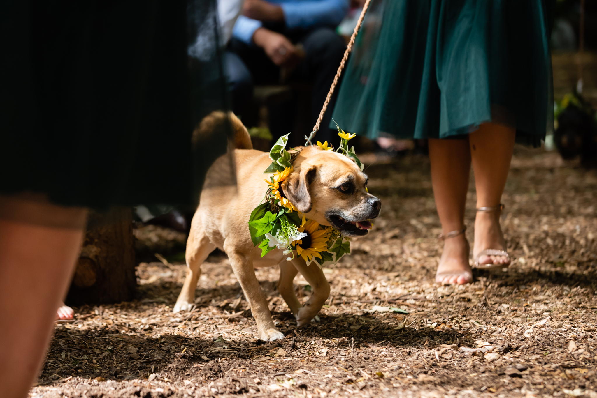 The Bride's dog during the wedding